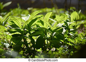 Vibrant green plant leaves in the forest