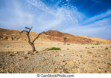 Stone desert near the resort of Eilat - The route starts in...