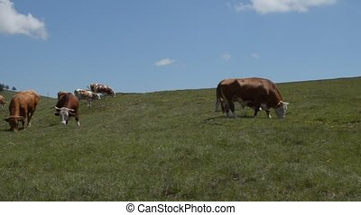 Panning Across Pasture - Pan the camera across the field...