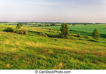 Summer rural landscape at sunset