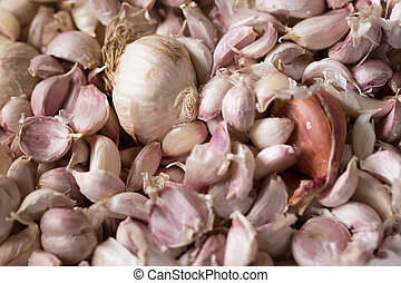 Common Garlic, Allium sativum L. ,