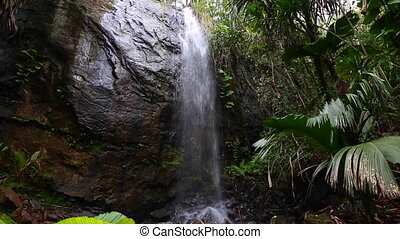 Hidden waterfall in the jungle - Hidden waterfall in jungle...