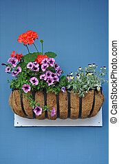 Flower basket on blue wall