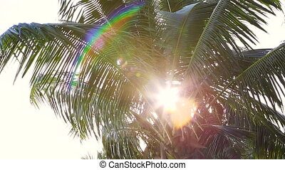 Tropical green palm tree at evening light
