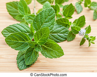 Closeup fresh peppermint leaves and peppermint flower from...
