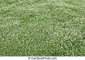Carpet of grass with flowers