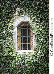 Old window entwined with ivy - Old window with bars on the...