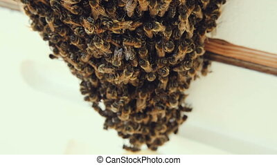 Large Swarm of bees at front door of house. Beekeeping.