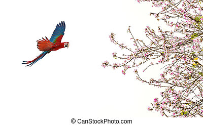 Colorful parrot with pink blossom over white background -...