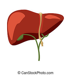 Human liver icon in cartoon style - icon in cartoon style on...