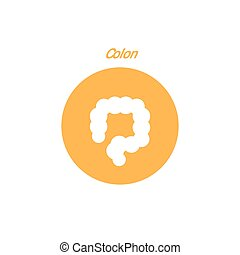 Vector colon simple icon Human internal abdomen organs