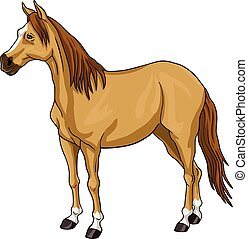 Brown Horse - Brown House White Head Vector