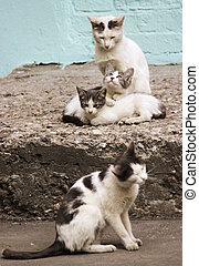 Family of four cats on the stone porch - Four cat-like...