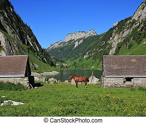 Summer scene at lake Fahlensee, Swiss Alps - Sheds and horse...