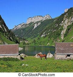 Sheds and horse at lake Fahlensee. - Summer scene at lake...
