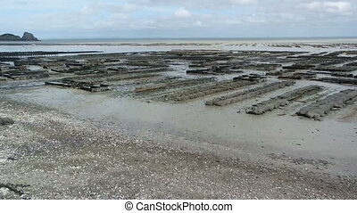 SAINT-MALO, CANCALE FRANCE - MARCH 26,2016: oyster farm