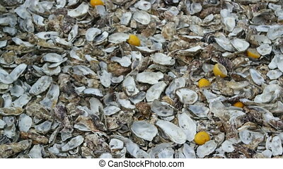 Background from a huge pile of oyster peel and a squeezed lemon on the shore