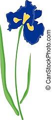 iris blue - vector iris flower