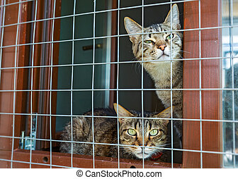Two cats in the shelter