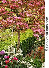 Pink kousa dogwood tree in colorful garden