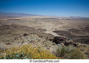 Yellow bush frame Anza Borrego State Park - Anza Borrego...