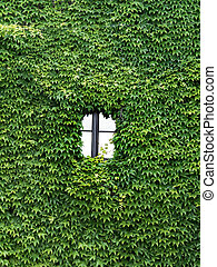 house is overgrown with ivy - a house is completely...