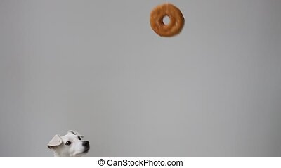 Tease dog food. Jack Russells jumping over a donut - Tease...