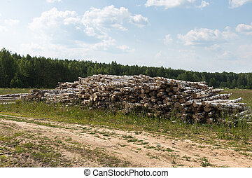 white birch tree logs heap