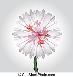 wild flower - vector illustration of a cornflower,...