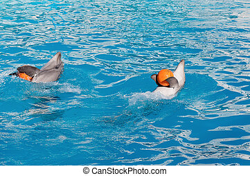 Dolphin with ball - Dolphins playing with a orange balls in...