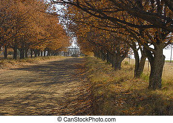 車道, 樹, 橡子