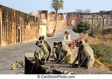 Monkeys Galore at Monument - Activities of monkeys greet the...