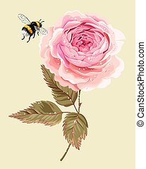 Rose with dew drops - Vector illustration of beautiful...