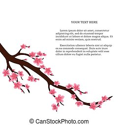 Japanese cherry tree isolated