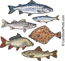 Colorful sea fish sketch style collection isolated on white...