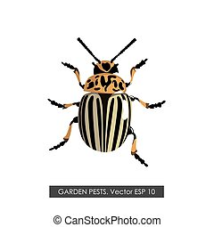 Detailed drawing of the Colorado potato beetle
