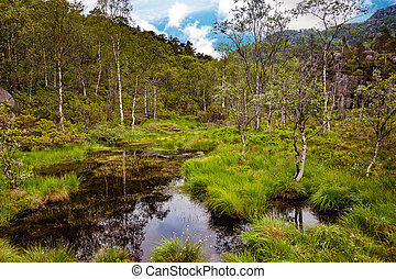 View of forest marsh - Norway landscape - Scene with swamp...