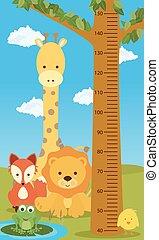 height chart animals