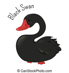 Black Swan isolated on white Large waterbird - Swan isolated...