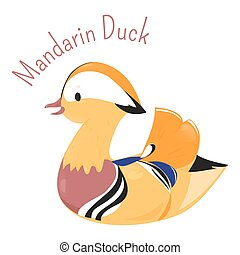 Mandarin duck isolated on white Aix galericulata Funny...