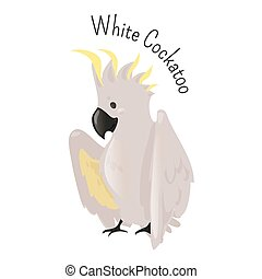 Exotic white cockatoo. Bird isolated. Cacatua alba....