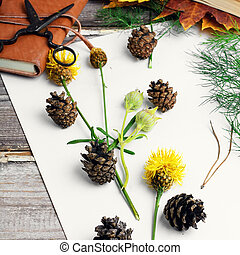 Herbarium of plants - Leaves and flowers laid out on white...