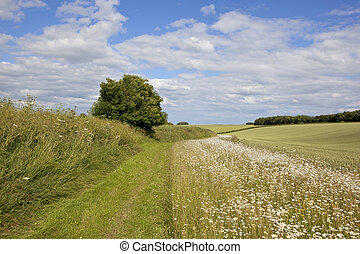 yorkshire wolds footpath - a footpath with wildflowers in...