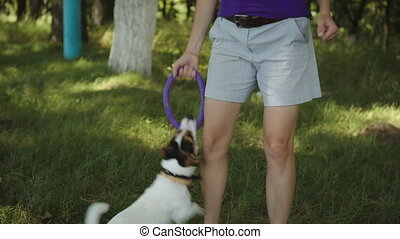 Woman playing with dog in Park - Young woman playing with a...