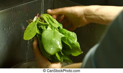 Male hands washing spinach Green spinach leaves Ingredient...