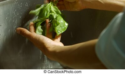 Male hands washing basil Basil leaves under water flow Herbs...