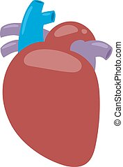 Human heart vector illustration - Human heart anatomy...