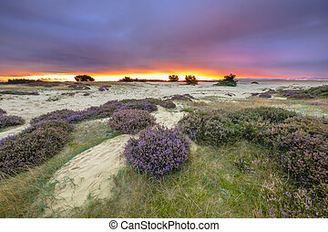 Purple sunset Hoge Veluwe - Dunes, Grass and Heathland...