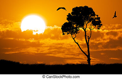 Africa nature sunset