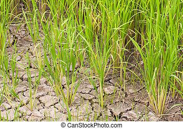 Rice fields in rural Thailand, Asia